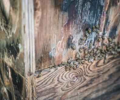 ニホンミツバチ保護を通じて、森と海の再生活動に取り組む  吉川浩さん訪問